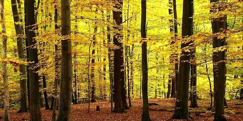جنگل راش/ تور جنگل راش