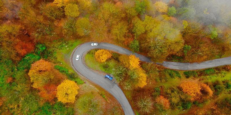 جنگل الیمستان در پاییز 99