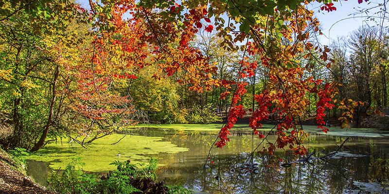 تور دریاچه چورت پاییز 99